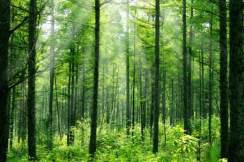 couvert forestier SADL