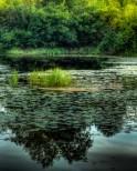 milieux humides SADL